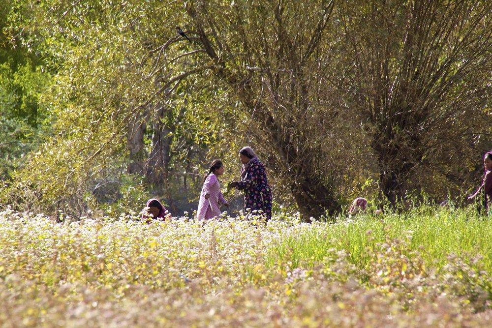 turtuk gilgit baltistan people himalayas 7.jpg