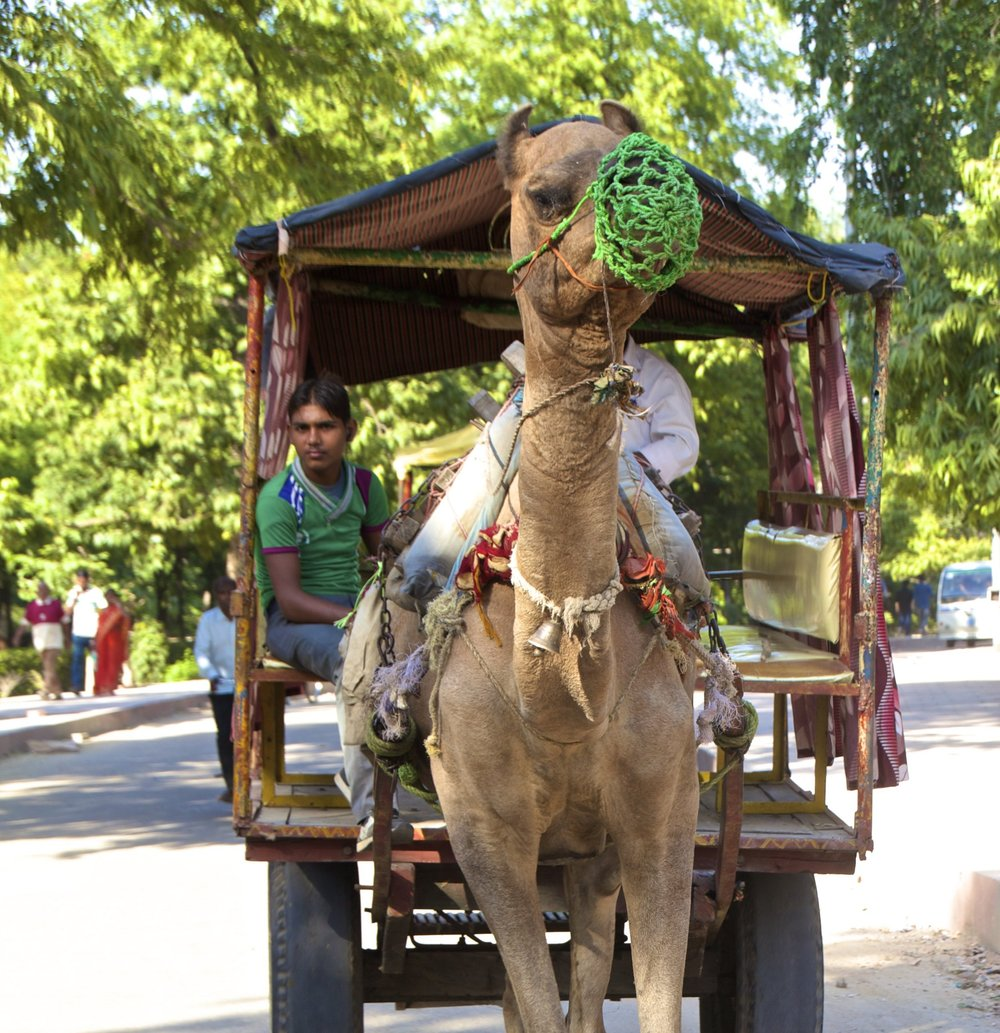 agra uttar pradesh india 2.jpg