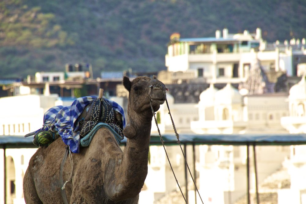 white city ghats pushkar rajasthan photography 14.jpg