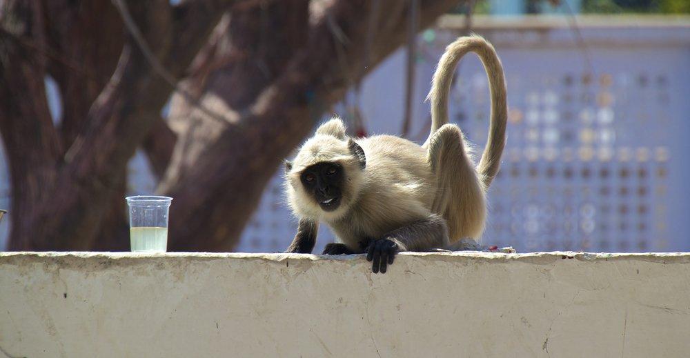 pushkar rajasthan ghats street photography 23.jpg