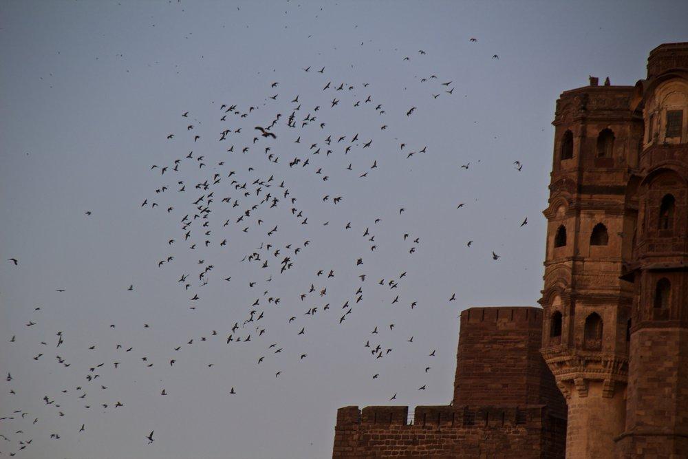 mehrangarh fort jodhpur rajasthan india 19.jpg