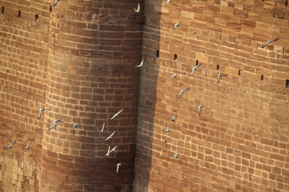 mehrangarh fort jodhpur rajasthan india 17.jpg