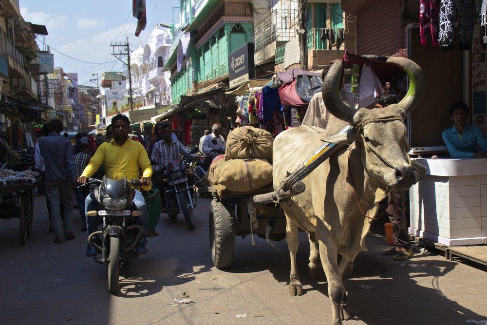 jodhpur rajasthan india city street photography 8.jpg