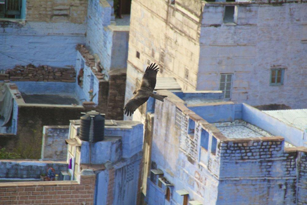 blue city photography jodhpur rajasthan india 16.jpg