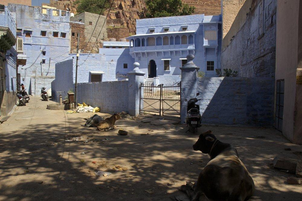 blue city photography jodhpur rajasthan india 38.jpg