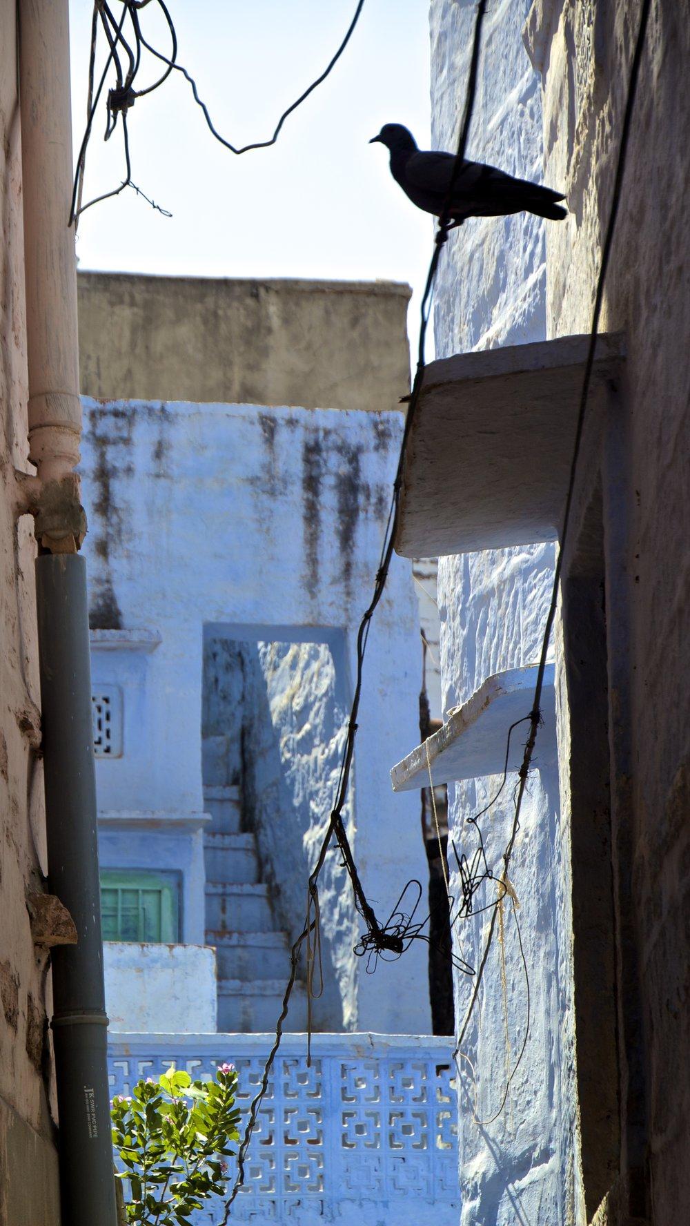 blue city photography jodhpur rajasthan india 39.jpg