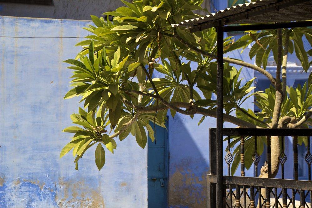 blue city photography jodhpur rajasthan india 49.jpg