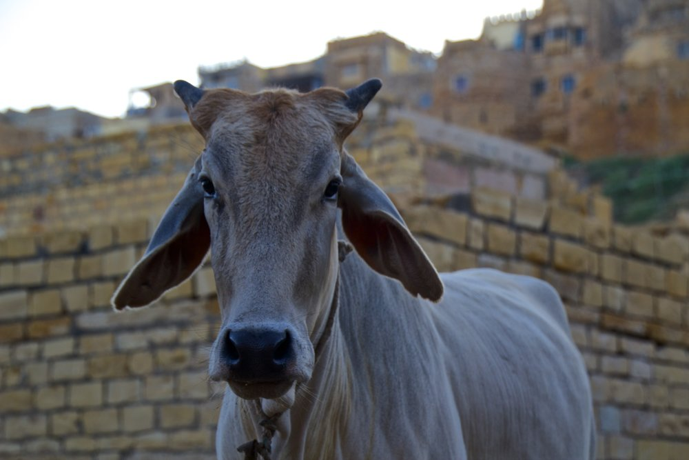 jaisalmer rajasthan india photography 8.jpg