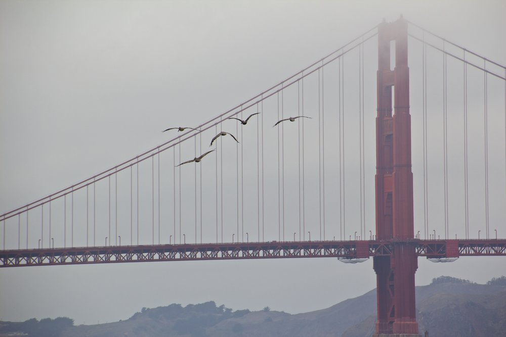 golden gate bridge san francisco 2.jpg