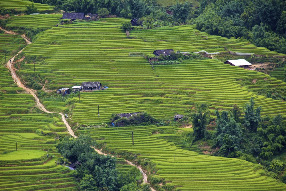 sa pa lao cai vietnam rice paddies 9.jpg