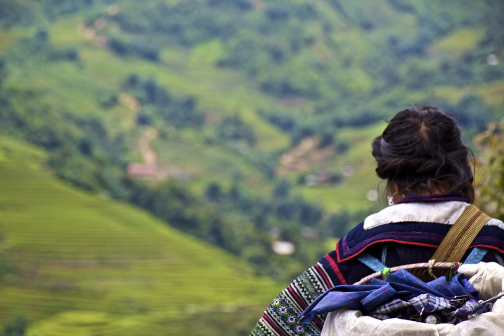 sa pa hmong people rice paddies 4.jpg