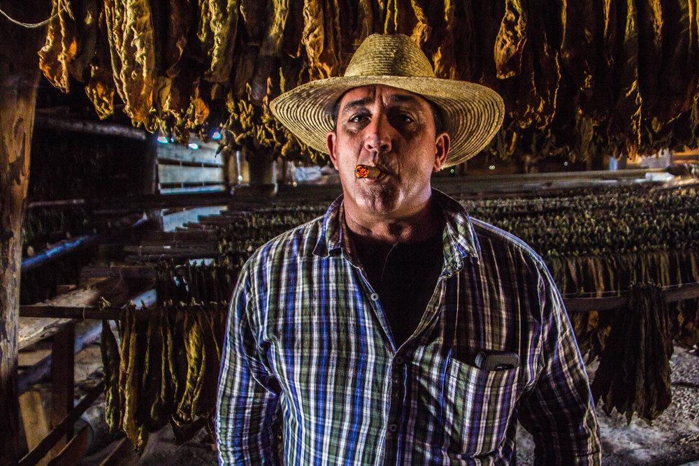 tobacco cigars valle de viñales cuba -1-4.jpg