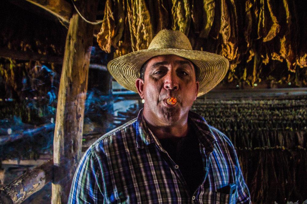 tobacco cigars valle de viñales cuba -1.jpg