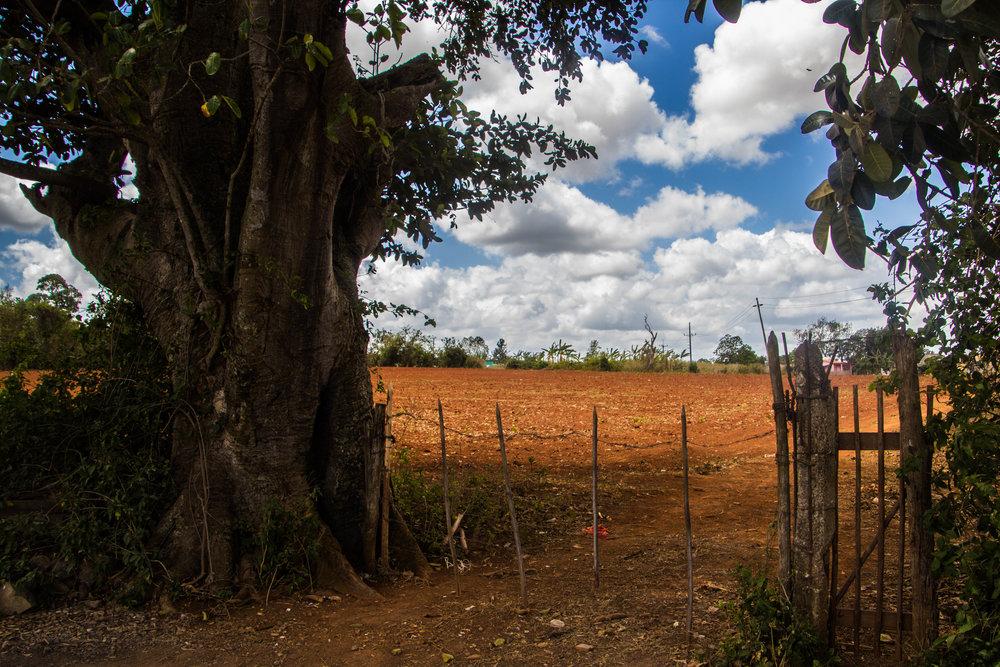 fields viñales cuba-1-2-2.jpg