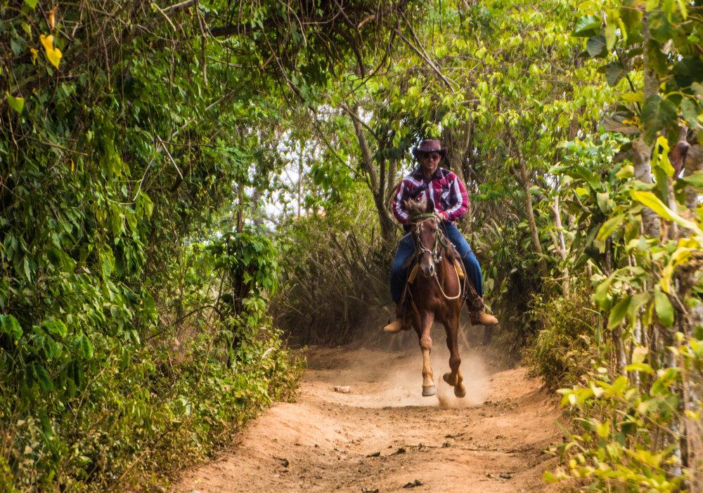 horses viñales pinar del rio cuba-1-3.jpg