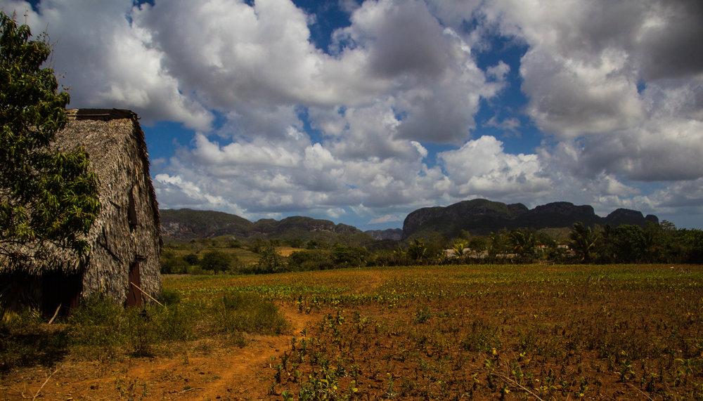 fields viñales cuba-1-3-2.jpg