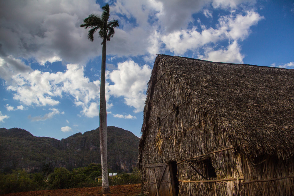 tobacco houses viñales cuba-1-2.jpg