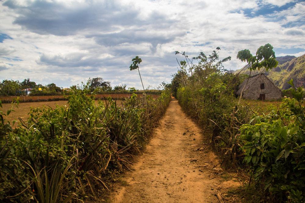 horse trails viñales pinar del rio cuba-1-2.jpg