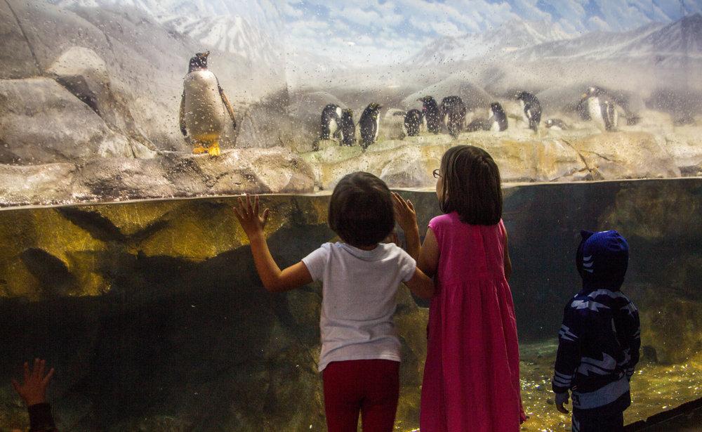 tennessee-aquarium-chattanooga-10.jpg