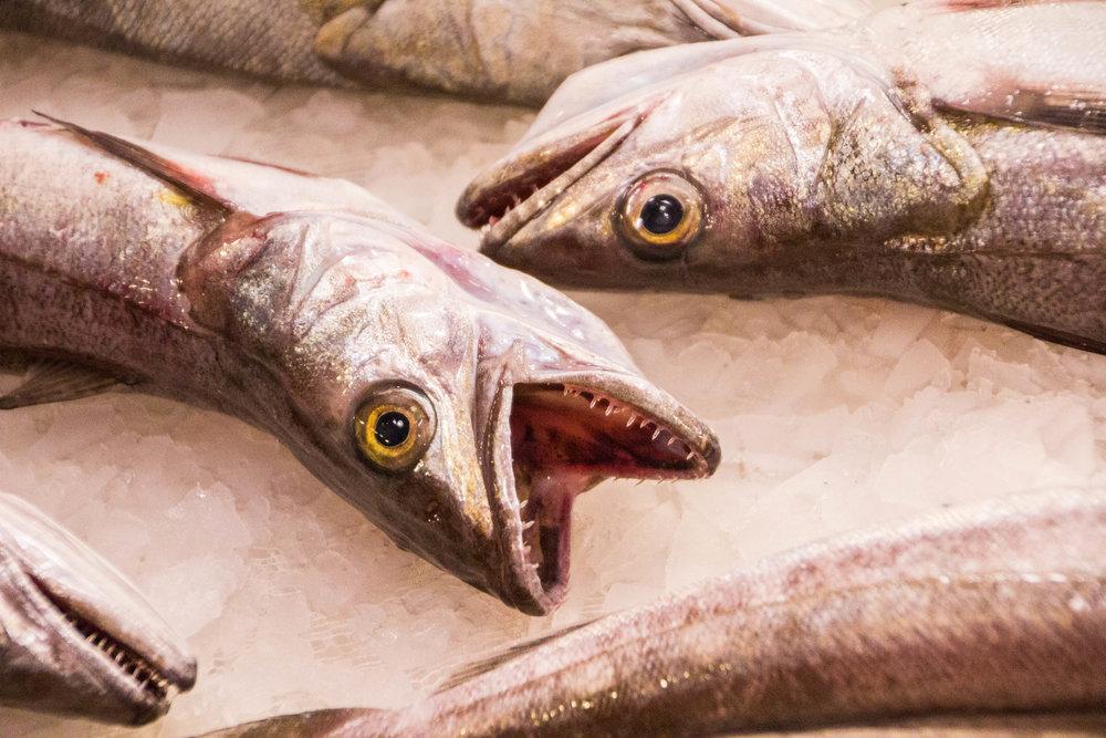 fish-market-catania-sicilia-12.jpg