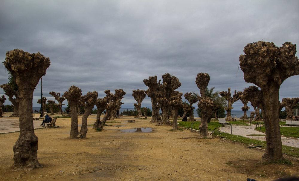cherchelle-roman-ruins-algeria-9.jpg