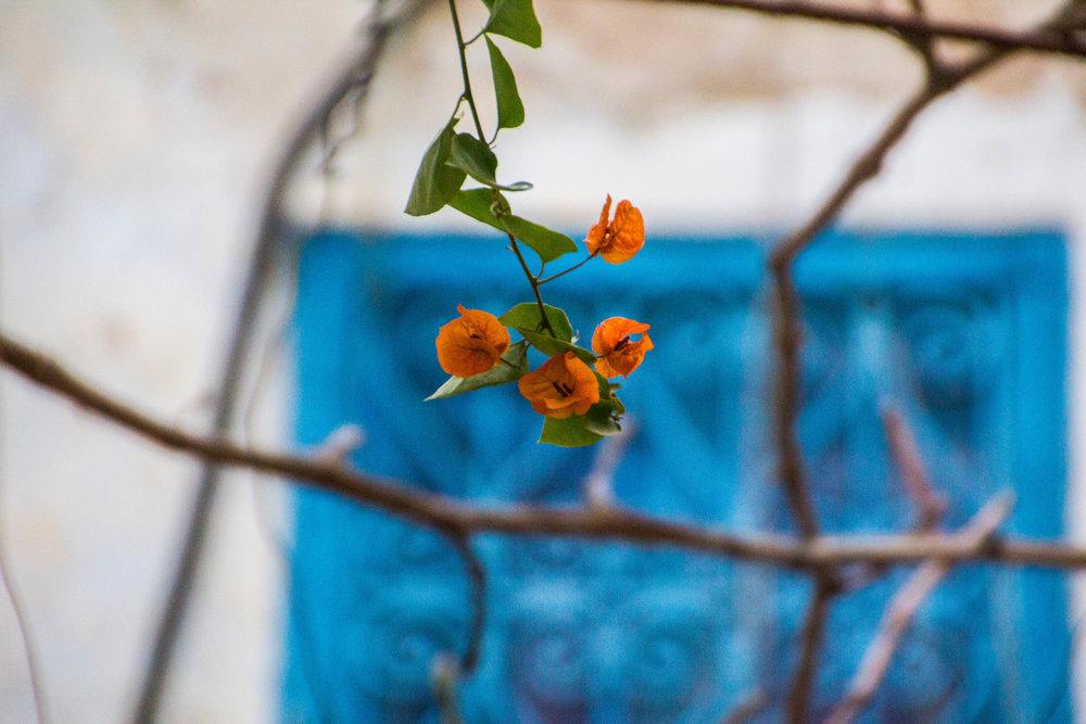 medina-photography-tunis-tunisia-48.jpg