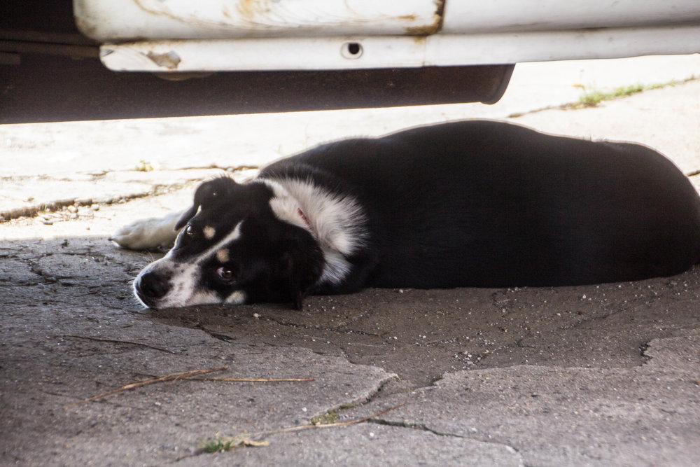 asheville-dog.jpg