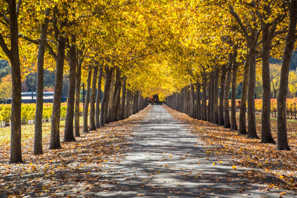 autumn-colors-napa-valley-25.jpg