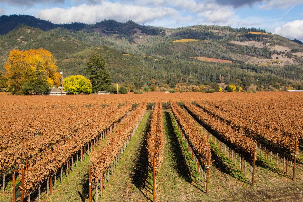 autumn-colors-napa-valley-30.jpg