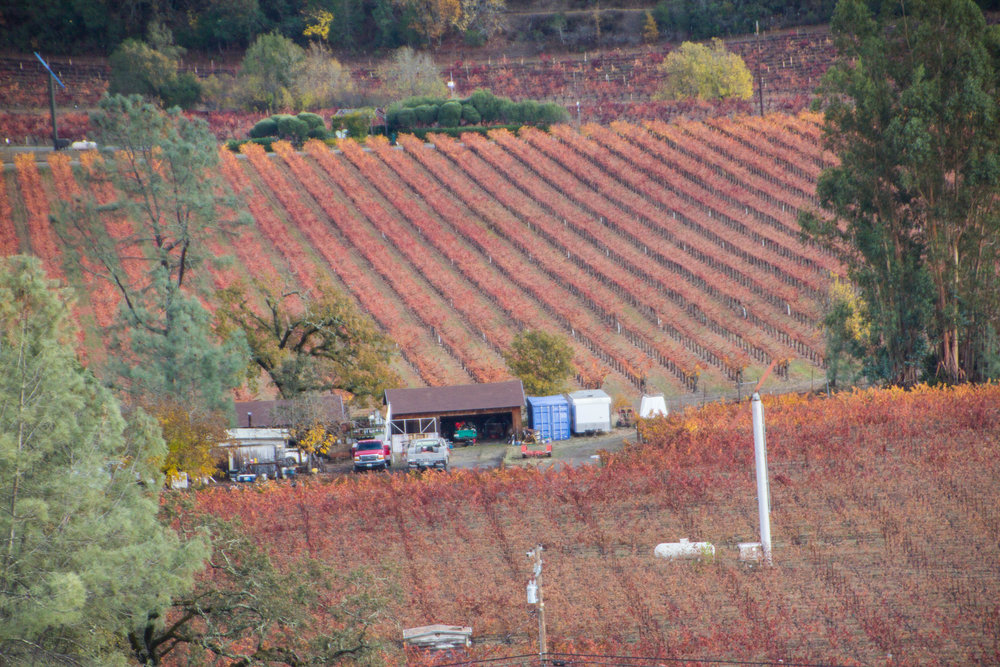autumn-colors-napa-valley-36.jpg