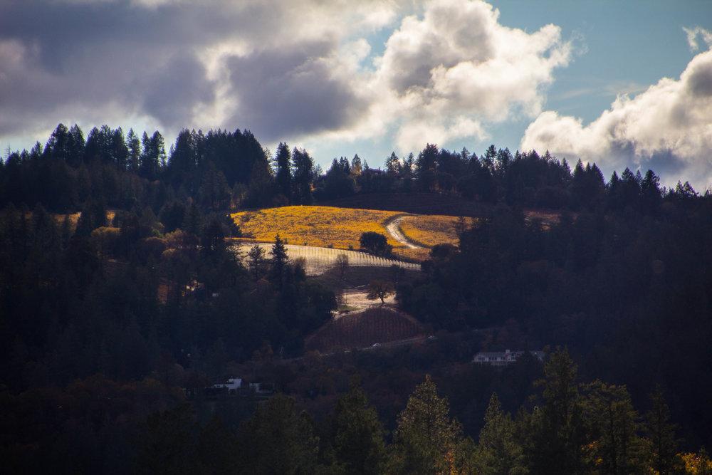 autumn-colors-napa-valley-38.jpg