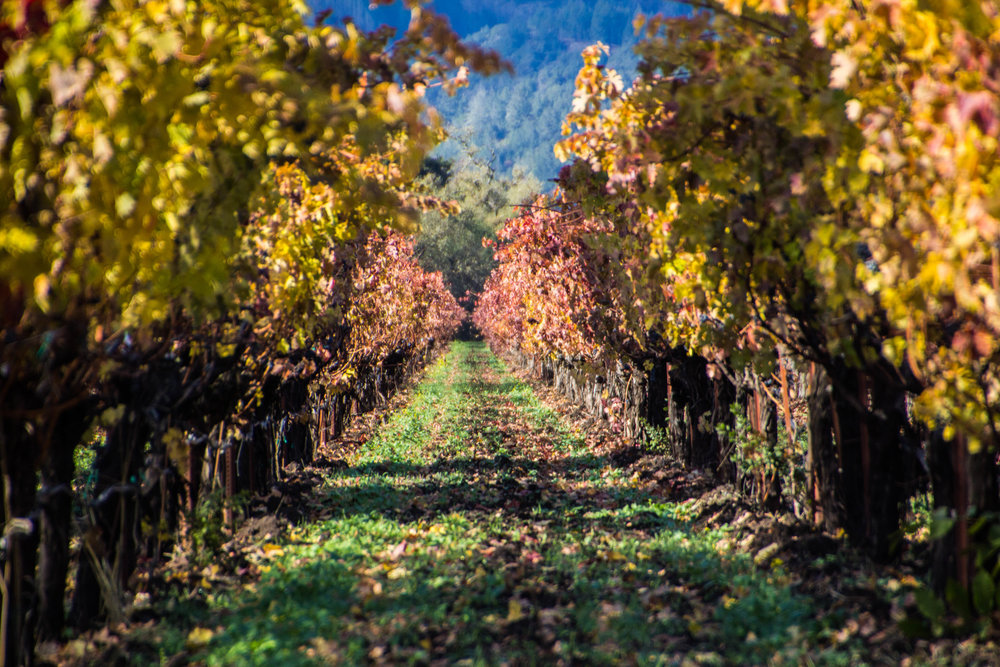 autumn-colors-napa-valley-2.jpg