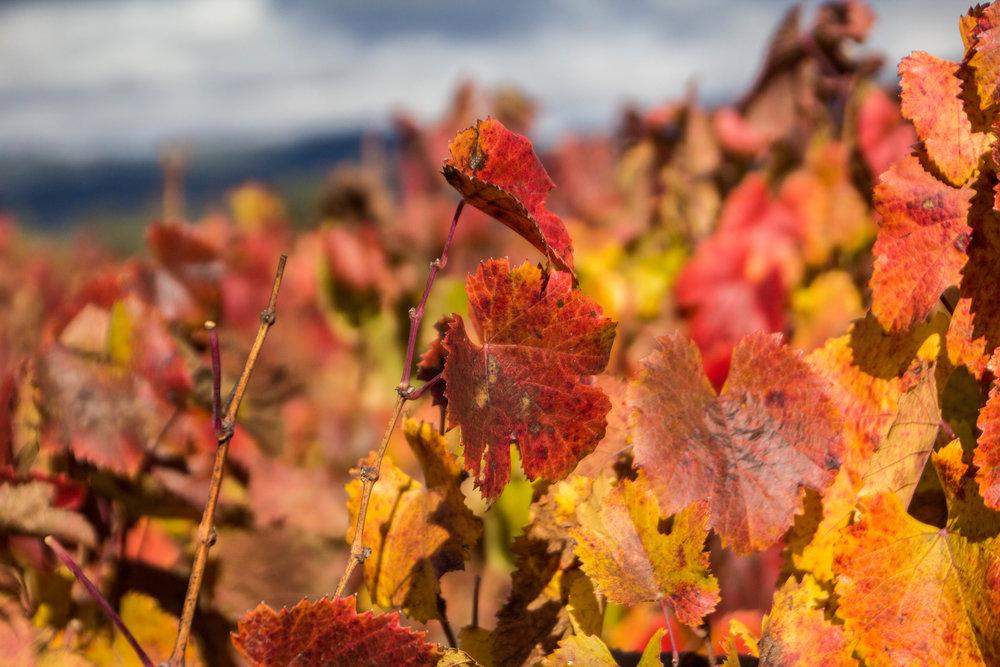 autumn-colors-napa-valley-6.jpg