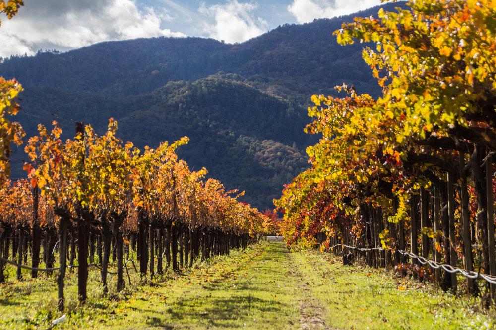 autumn-colors-napa-valley-10.jpg