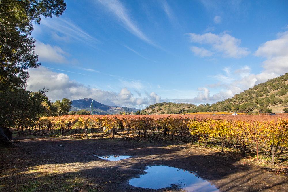 autumn-colors-napa-valley.jpg