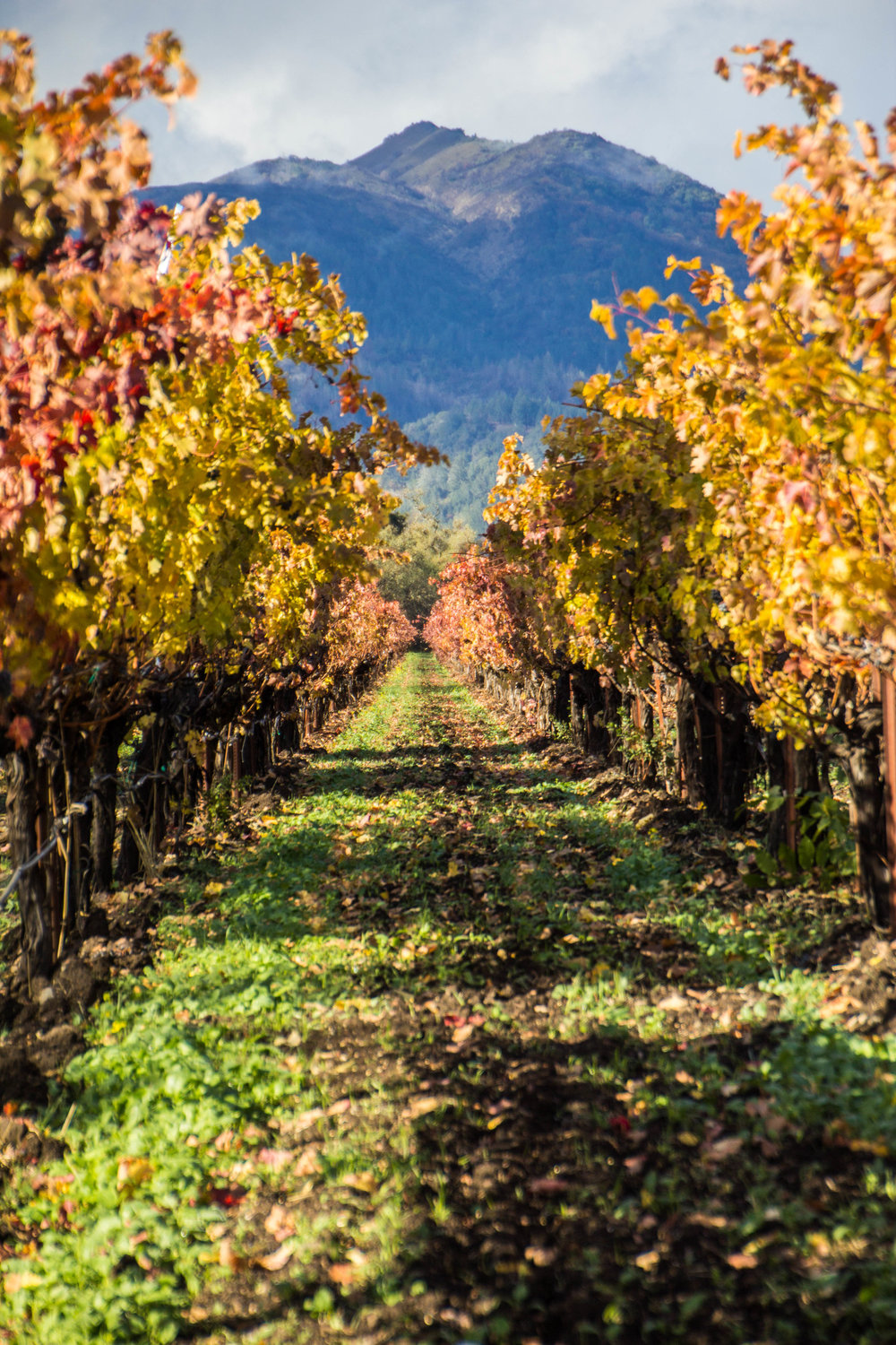 autumn-colors-napa-valley-3.jpg