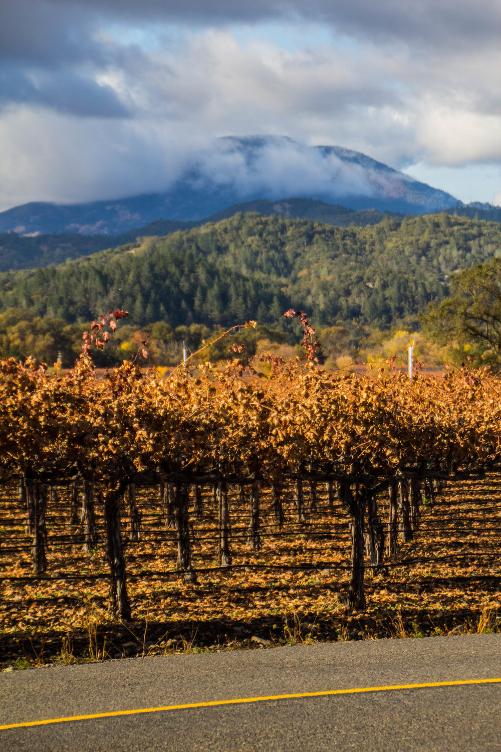 autumn-colors-napa-valley-34.jpg