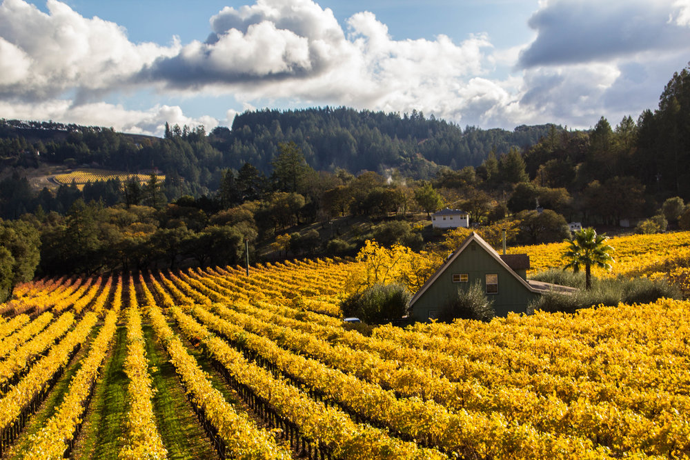 autumn-colors-napa-valley-42.jpg