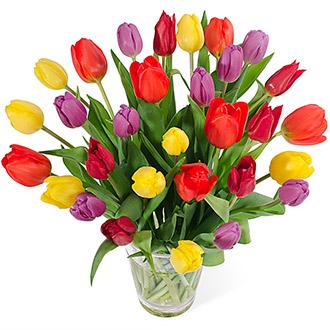 Dutch Tulip.jpg