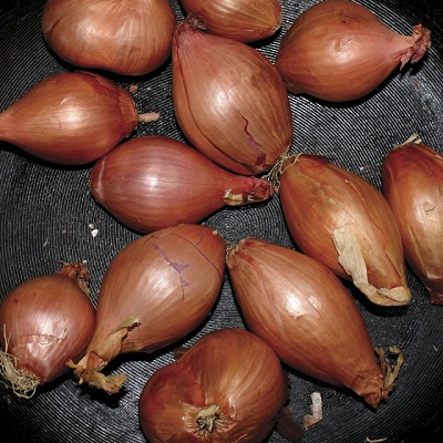 Ty-Segall_Fried-Shallots.jpg
