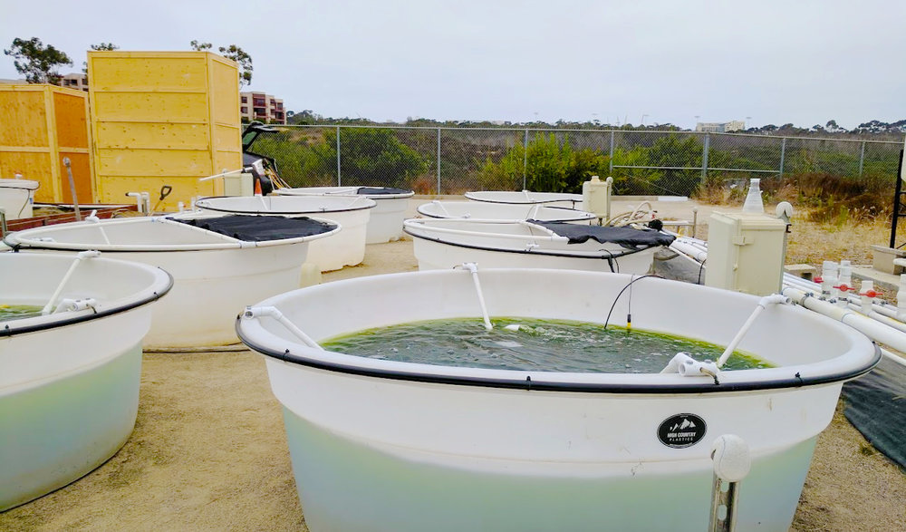 Outdoor algae growth tanks