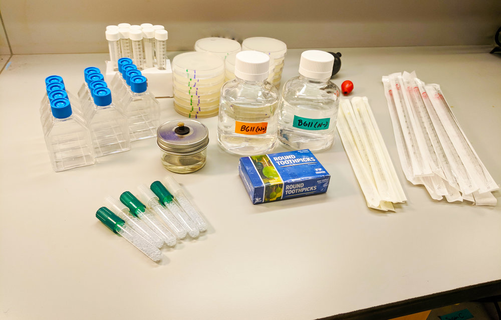 Sample equipment in an algae classroom kit.