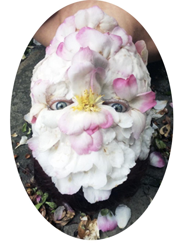 Camellia Cameo  2016 photographic print
