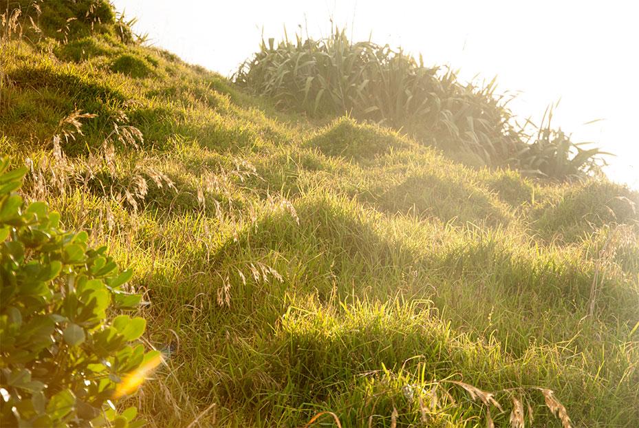 NZ_Muriwai-Grass_Northland.jpg