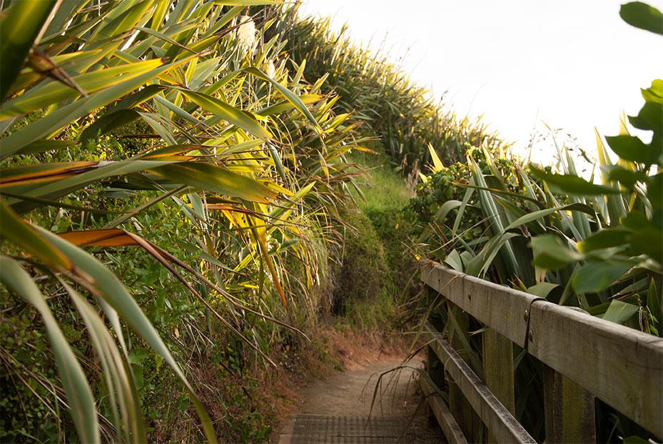 NZ_Muriwai-Plans_Northland.jpg
