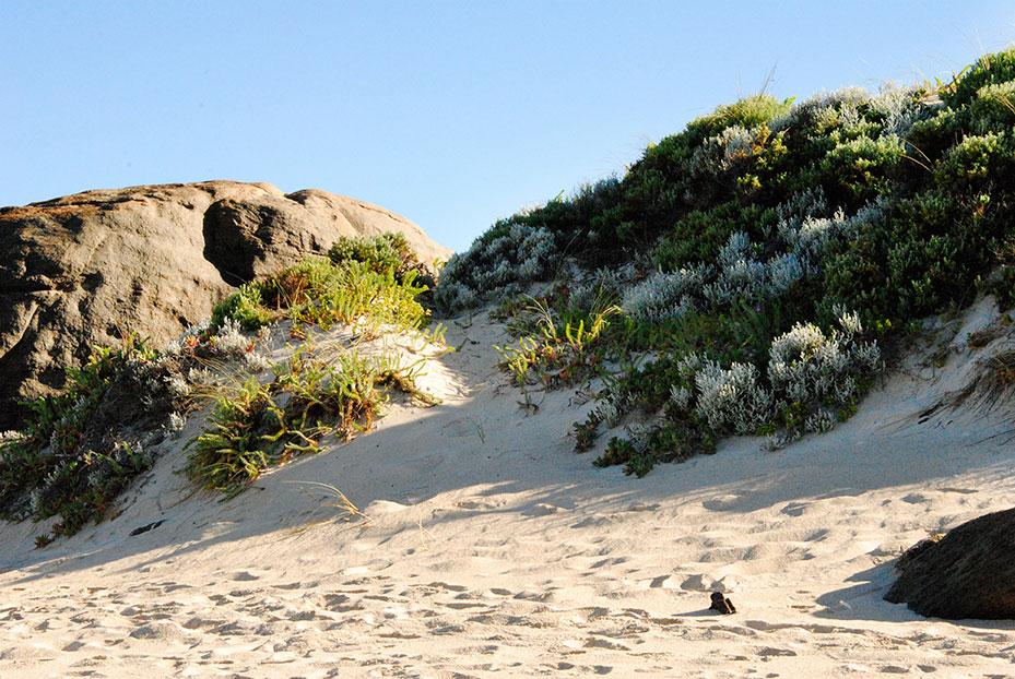 AUS_Sand-Dunes_MR.jpg