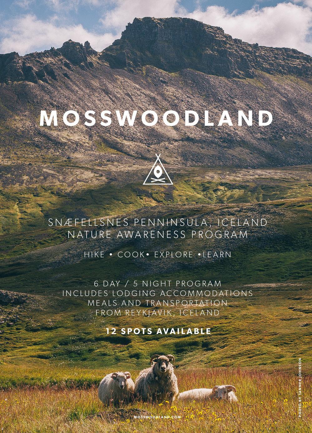 MOSSWOODLAND_TRAVELIMAGE_Iceland.jpg
