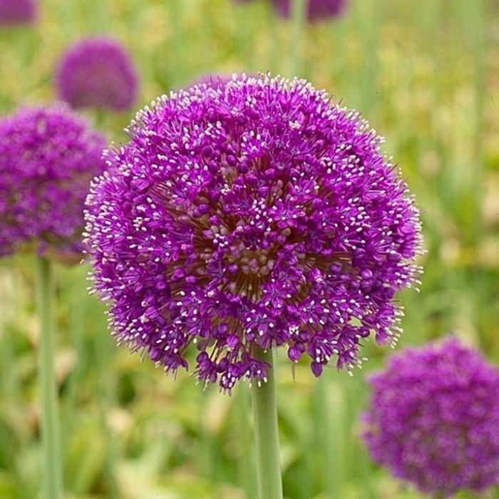 9db331e6a9fed53e84ed80b8034470b9--border-garden-garden-shrubs.jpg