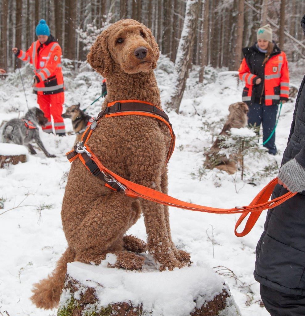 Rettungshundestaffel BA (40).jpg