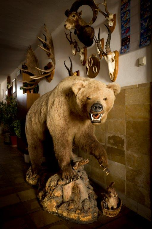 Der Grizzlybär in Luttenwang ist in der Wirtschaft eine Attraktion!